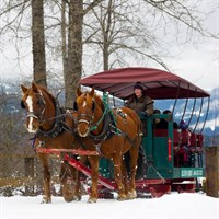 Sleigh Ride in Whistler